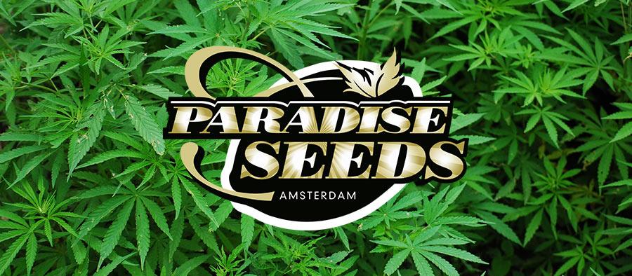 code promo paradise seeds