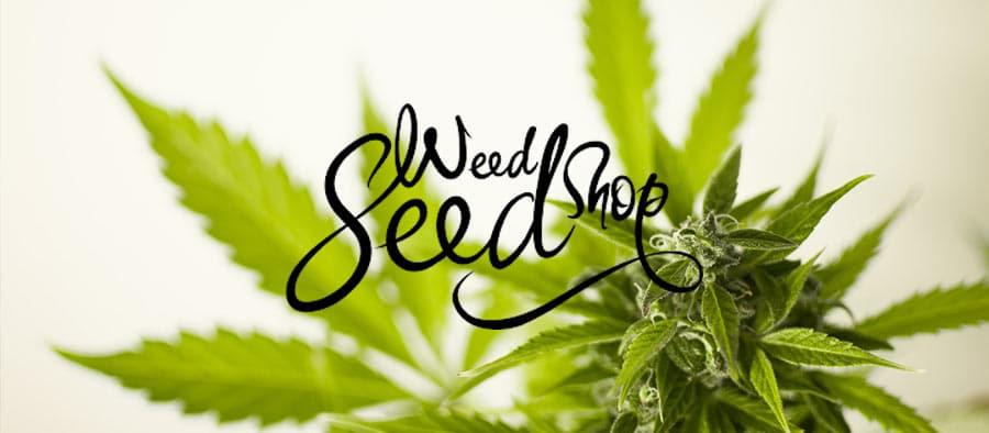 rabais weed seed shop