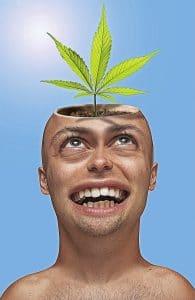 effets du cannabis cbd