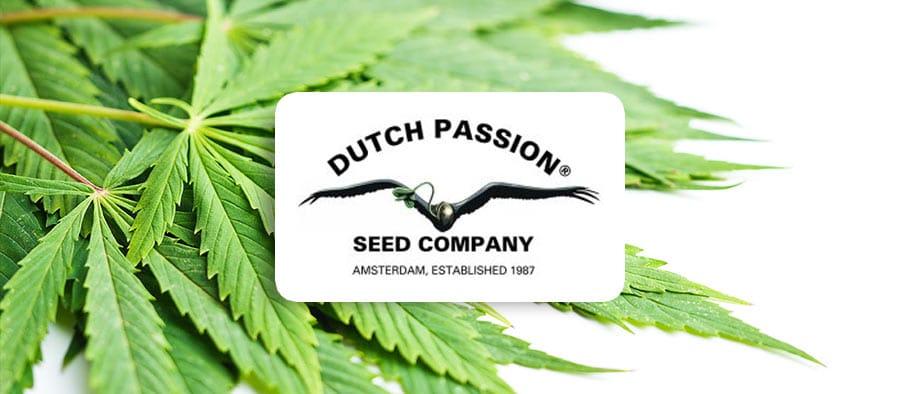 promo code dutch passion seeds